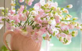цветы, вазе, букет