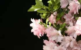 цветы, растения Фон № 2283 разрешение 1920x1080