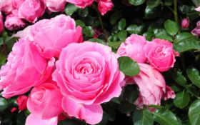 цветы, anh, hinh