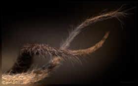fibers, kuidut