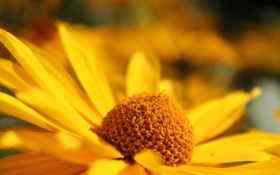 цветок, желтый Фон № 19621 разрешение 1680x1050