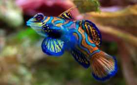следы, интересные, рыбах