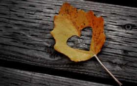 сердце вырезанное в листике-2