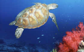 turtle, sea Фон № 12956 разрешение 1920x1200