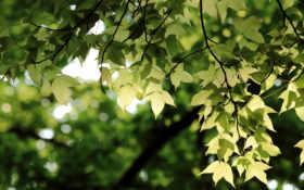 листья, ветки, зелёный