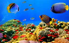 underwater, фотообои, world
