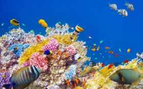 world, underwater, ocean