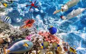 риф, coral, underwater
