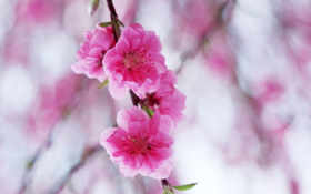 цветы, нежные, очень