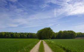 лес, трава