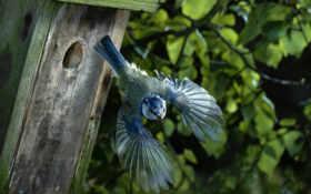 птичка и вылетает