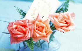 trimiteri, цветы, trandafiri