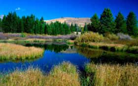 beaver, ponds