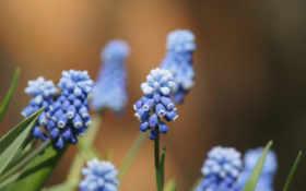 blue, высоком, размытость