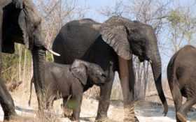 слоны, животные, слон Фон № 39499 разрешение 1920x1080