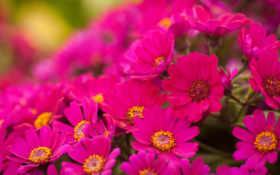 گل, های