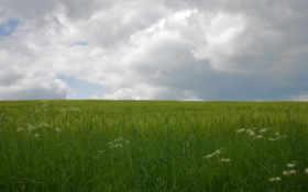 поле, дождь