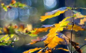 макро, листья Фон № 24071 разрешение 1680x1050