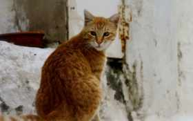 кот, рыжий Фон № 33252 разрешение 1920x1080
