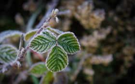 leaves, картинка