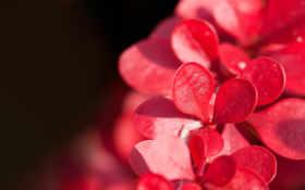 цветы, красивые, красные