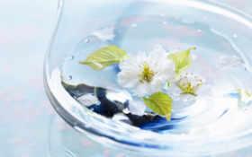 water, растительность, воды