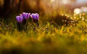 весна, цветы, марта