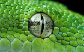 глаз, snake, vind