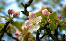 деревья, цветут