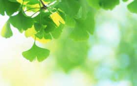 leaves, fresh