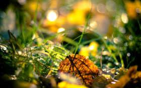 листья, осень, трава Фон № 81247 разрешение 2560x1600