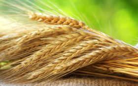 соломенные, озимой, зерно