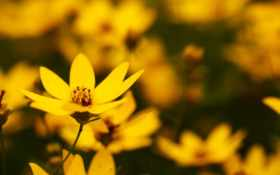 цветы Фон № 25441 разрешение 1680x1050