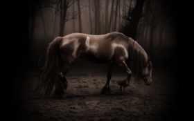 horse, dark Фон № 6255 разрешение 1600x1200