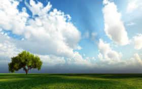 дерево, поле Фон № 12447 разрешение 1920x1200