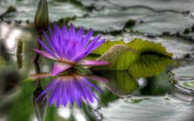 вода, цветок
