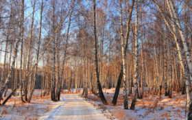 зима, лес Фон № 32017 разрешение 1920x1080