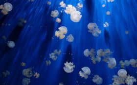 море медузы