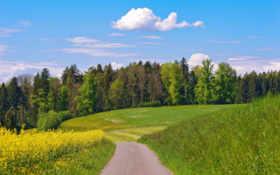 дорога, деревья Фон № 15762 разрешение 1920x1200