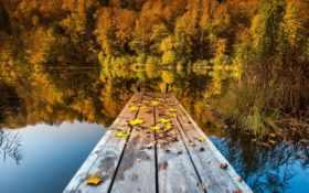 осень, природа Фон № 6673 разрешение 2560x1600