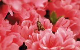 кузнечик в цветах