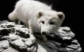 животные, лисы Фон № 6230 разрешение 2880x1920