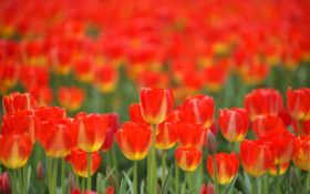 Цветы 25519