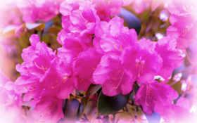 Цветы 37392