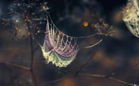web, роса, капли