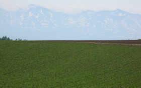 луга, поля