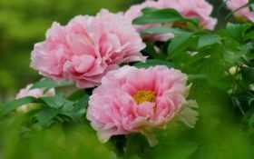цветов, красота