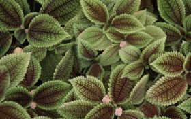 листья, природа Фон № 16791 разрешение 1920x1200