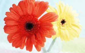 flowers Фон № 90242 разрешение 1600x1200