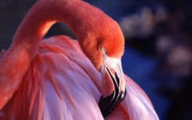 фламинго, розовый, под
